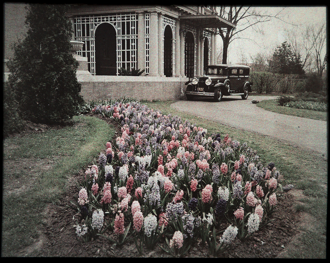 Hyacinths and Driveway of M.B. Nelson