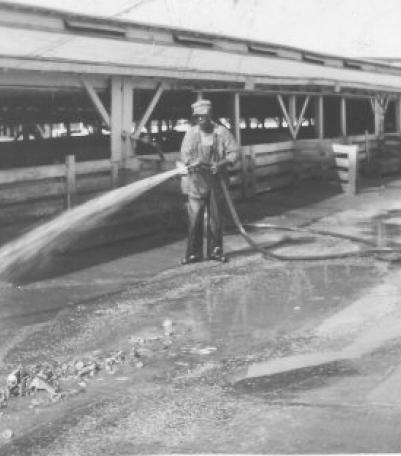 Unidentified man working in the Stockyards.